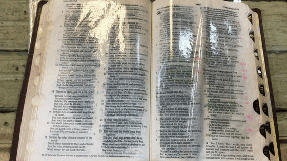 A Bible Dripping with Oil