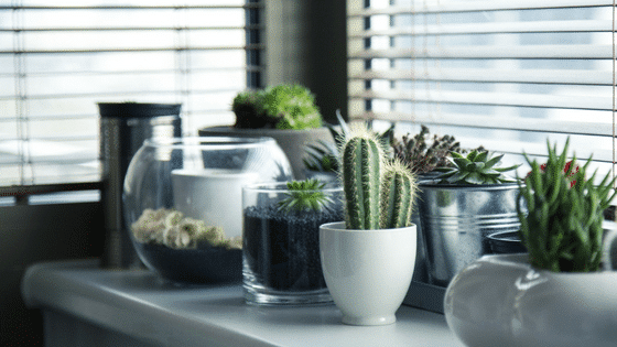 3 Reasons to Keep a Plant in Every Room